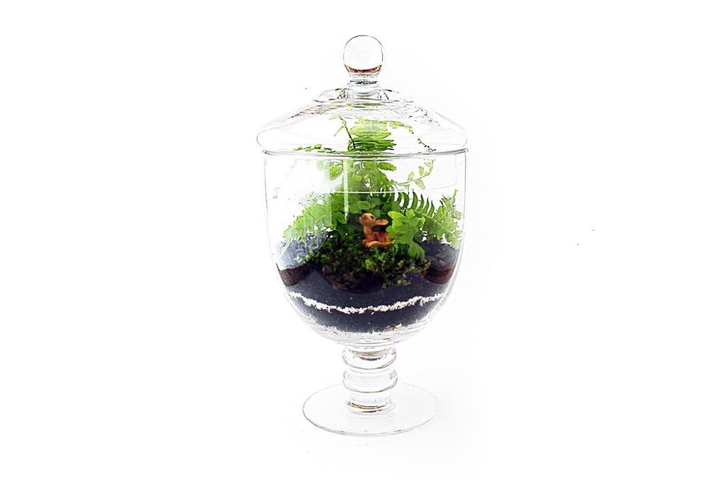 Planter i en lukket glassvase. Foto.