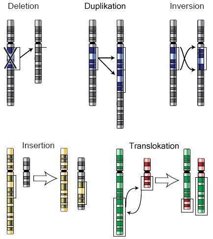 Kromosommutasjoner. Illustrasjon.
