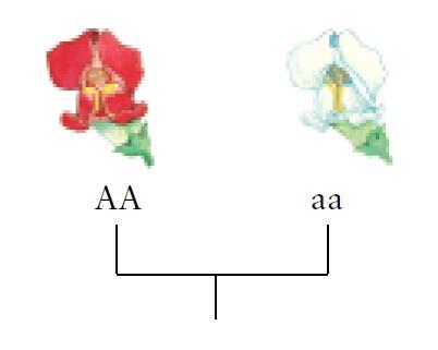 En hvit og en rød blomst. Illustrasjon.