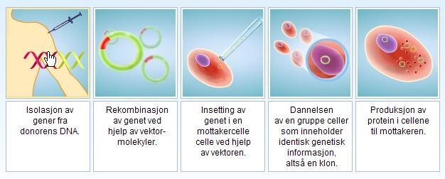 Plansje som viser innsetting av gen i plasmid og kloning av DNA. Illustrasjon.