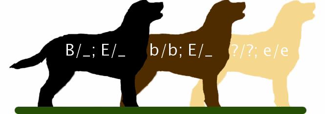 Tegning av tre hunder. Illustrasjon.