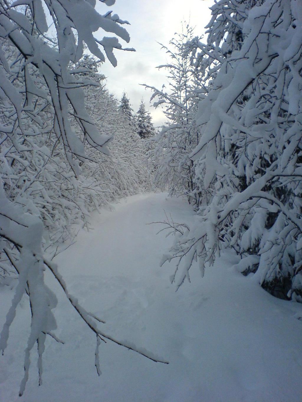 Lissådalen om vinteren. Foto.