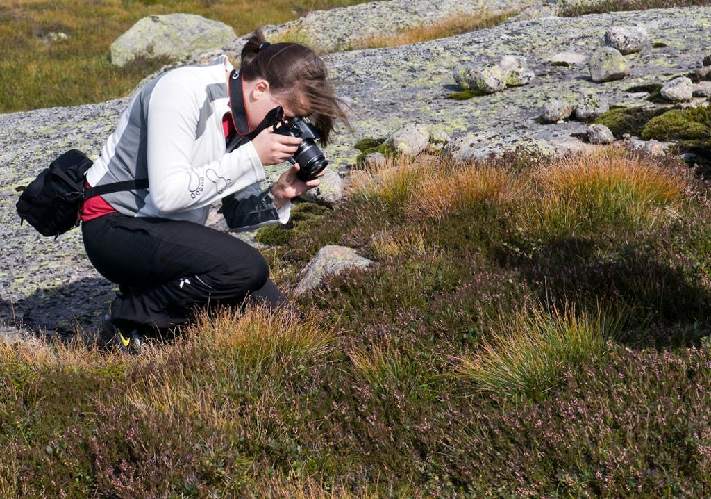 Ein student fotograferer røsslyng på ekskursjon i fjellet. Foto