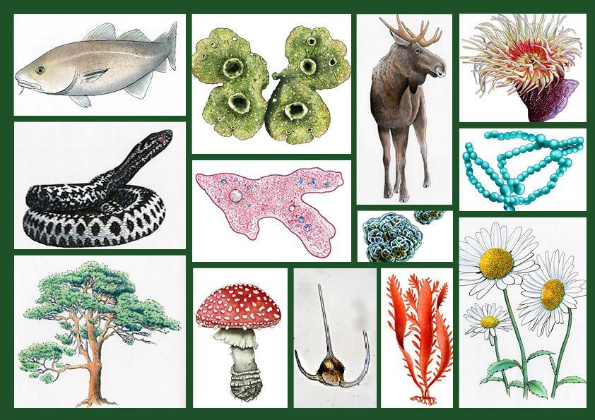 Kollasj med ulike typer organismer. Illustrasjon