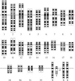 Kromosomer stilt opp parvis.