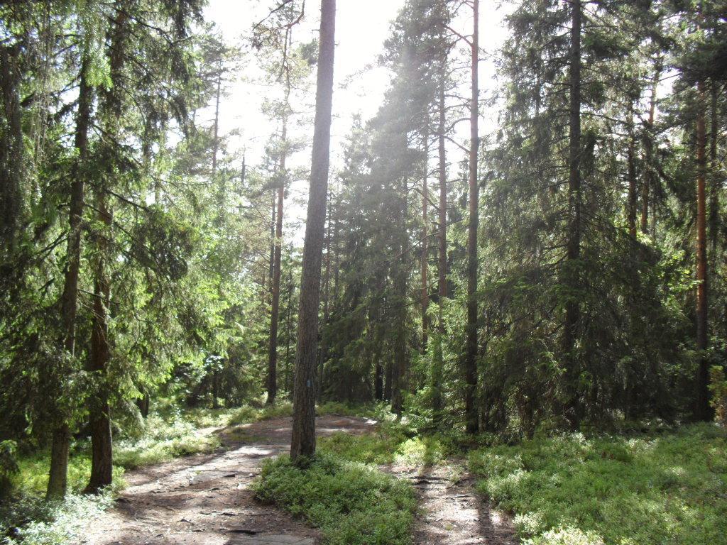 Sti innover i skog. Foto