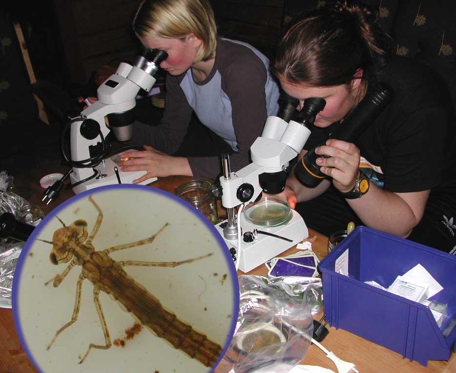 To elever studerer plankton i stereolupe. Foto.