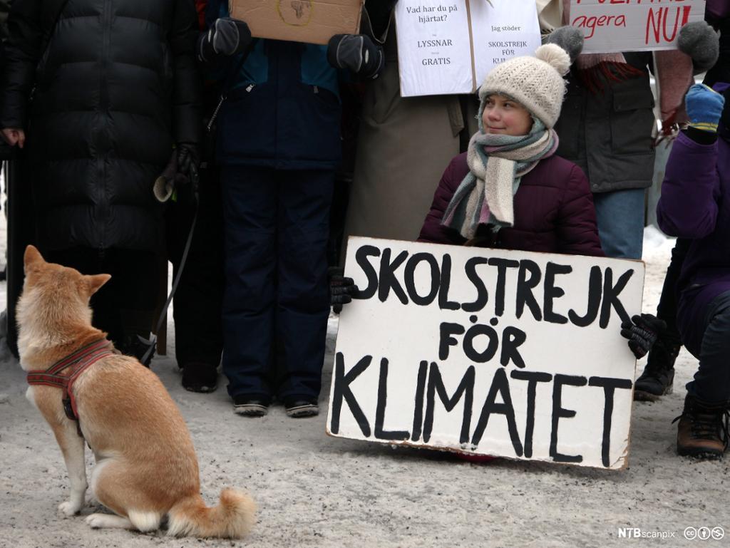 Greta Thunberg med plakat om at hun skolestreiker for klimaet. Foto.