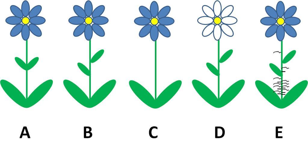 Fem blomsterplanter. Illustrasjon.
