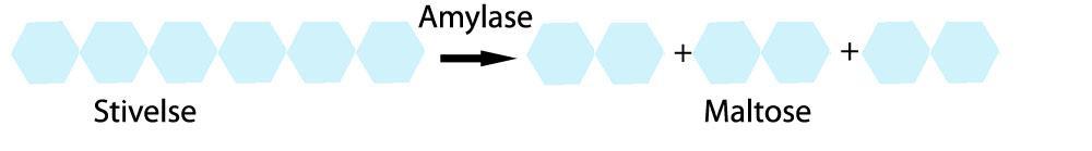 Spalting av stivelsemolekyl. Illustrasjon.