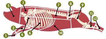Oppdeling av svin. Illustrasjon.