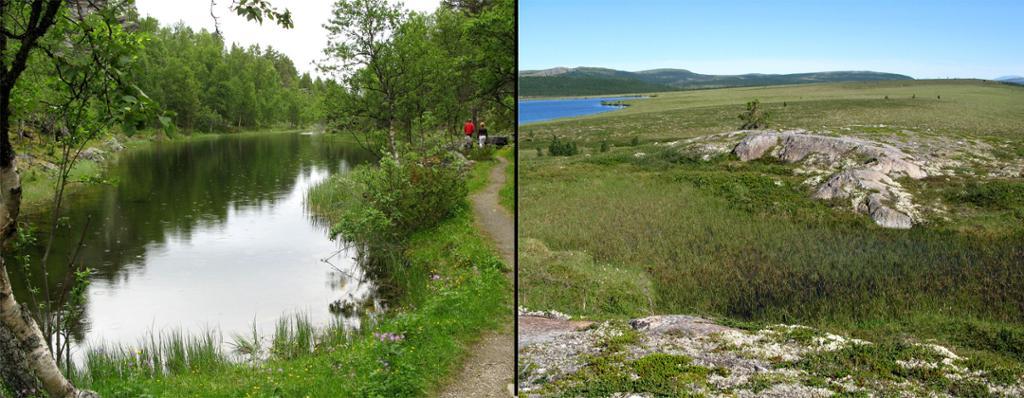Tjern i bjørkeskog til venstre og vidde til høyre.