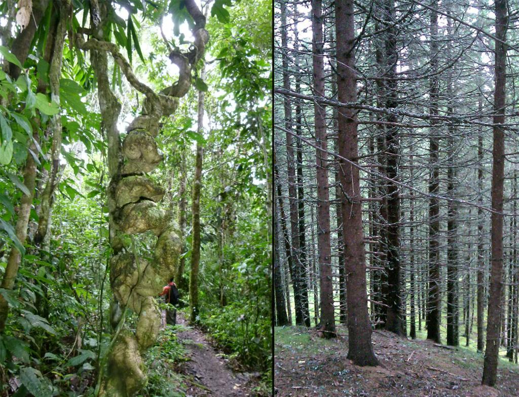 To typer skog. Foto
