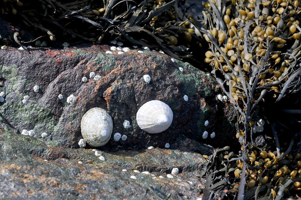 Sneglehus på stein. Foto