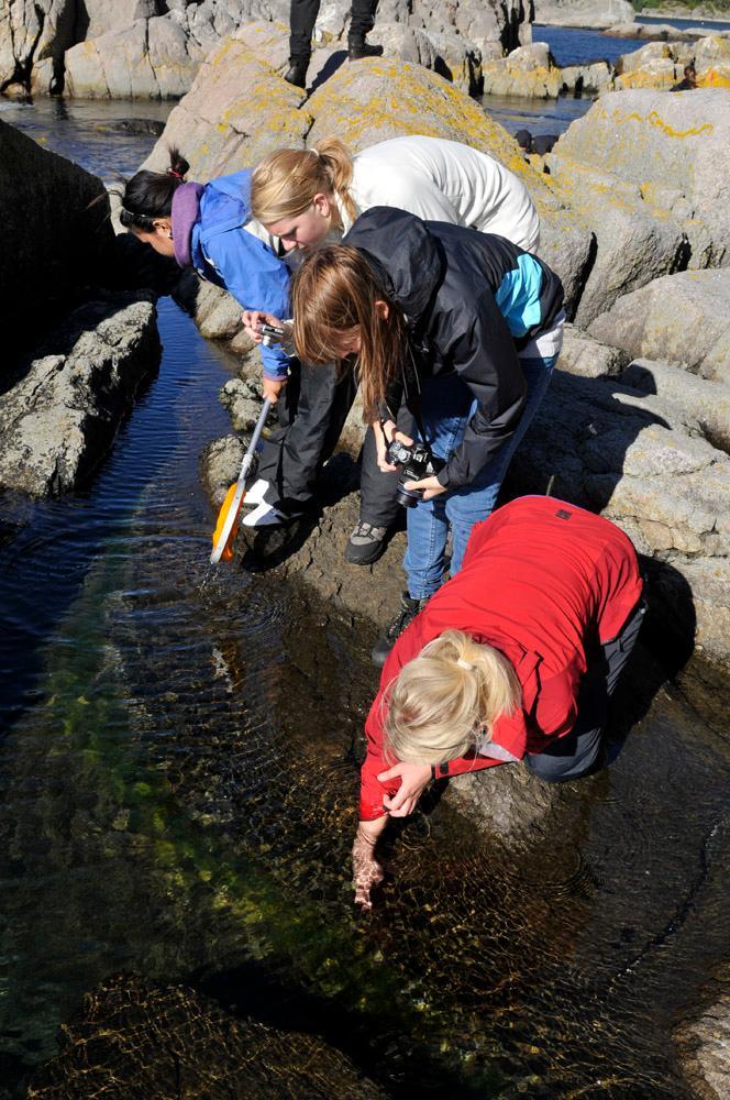 Fire elever leter i vannkanten. Foto.