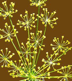 Planter med repeterende enheter - molduler. Foto.
