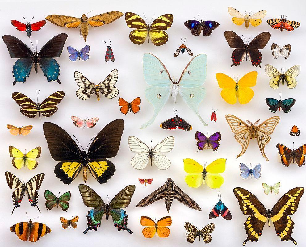 Mange fargerike sommerfugler fiksert på hvit overflate. Foto.