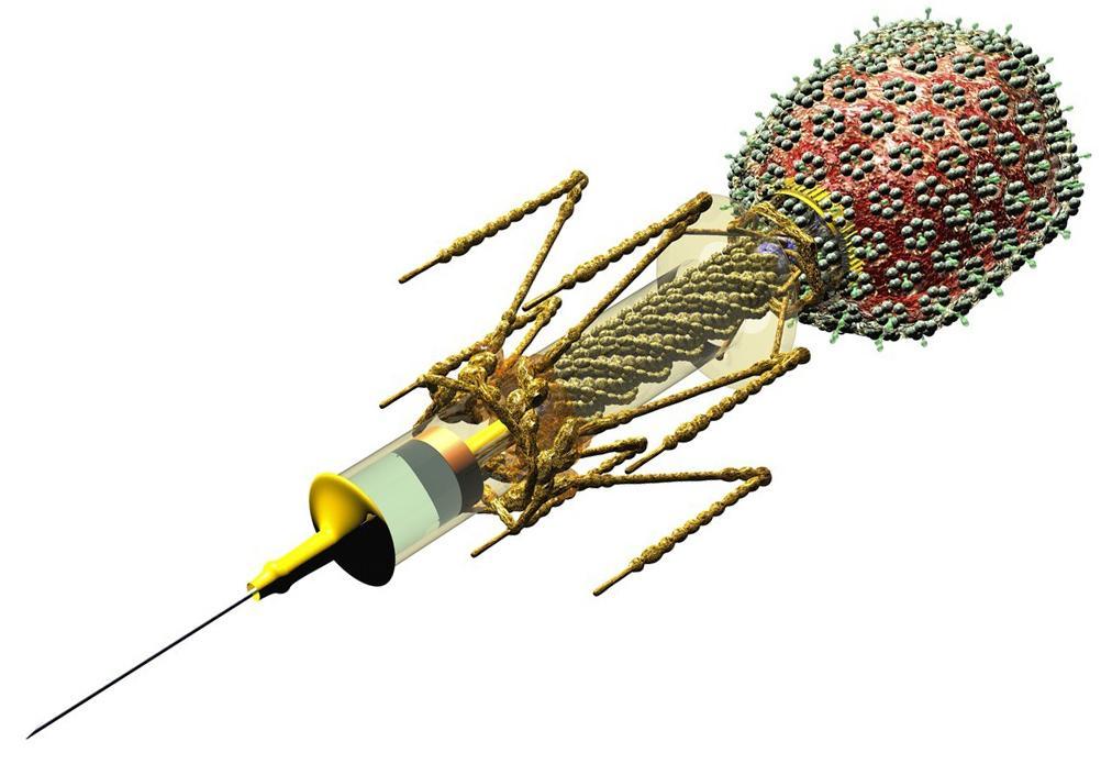 Bakteriofag tegnet som en sprøyte. Tegning.