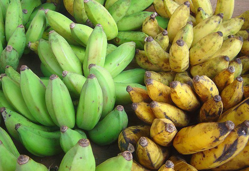 Modne gule bananer og umodne grønne bananer