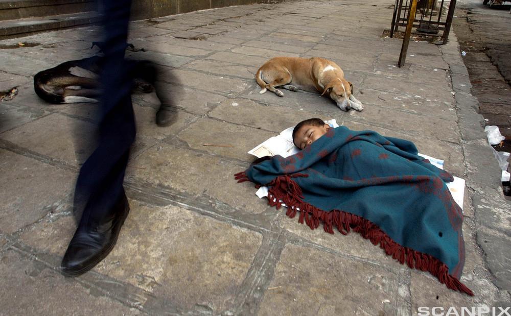 Barn som sover på gaten i Bombay. Foto.