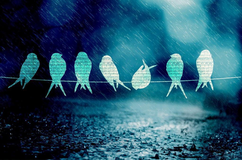 Fuglesang i regnet. Illustrasjon.