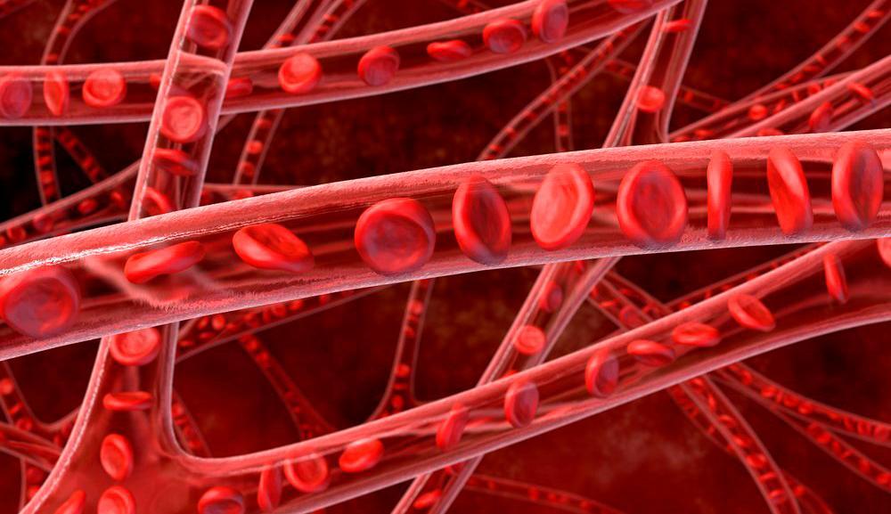 Nettverk av tynne blodårer med synlige røde blodlegemer. Tegning.