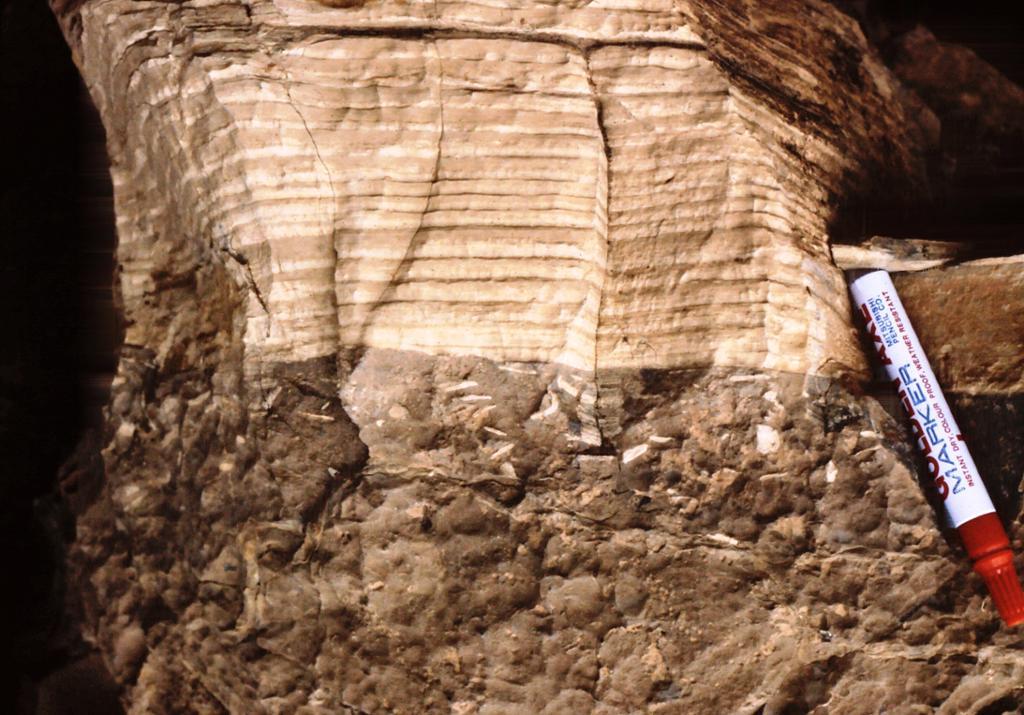 Marine avsetninger i sedimentær bergart. Foto.