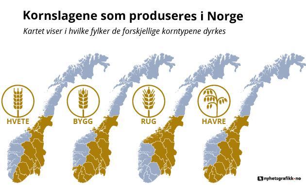 I hvilke fylker de ulike kornslagene produseres. Grafikk