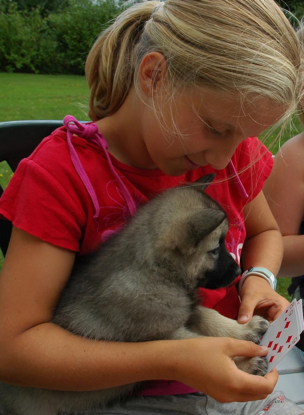 Liten jente spiller kort med en valp. Foto