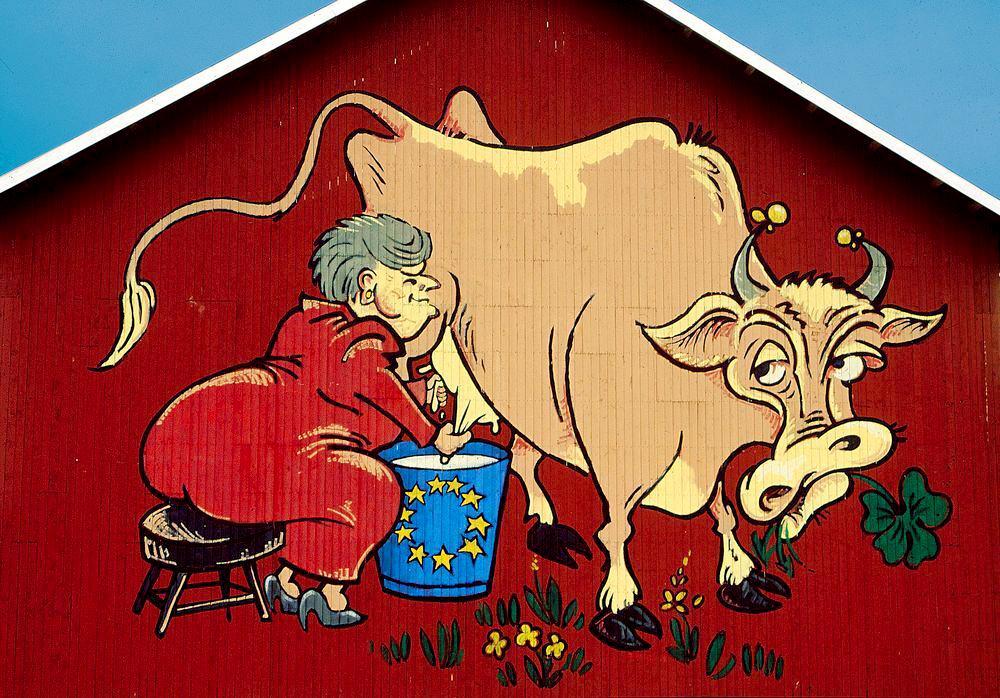 EU-kua malt på en låvevegg