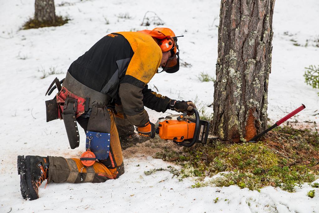 Skogsarbeider som feller et tre. Foto