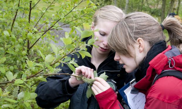 To jenter som studerer et tre. Foto.