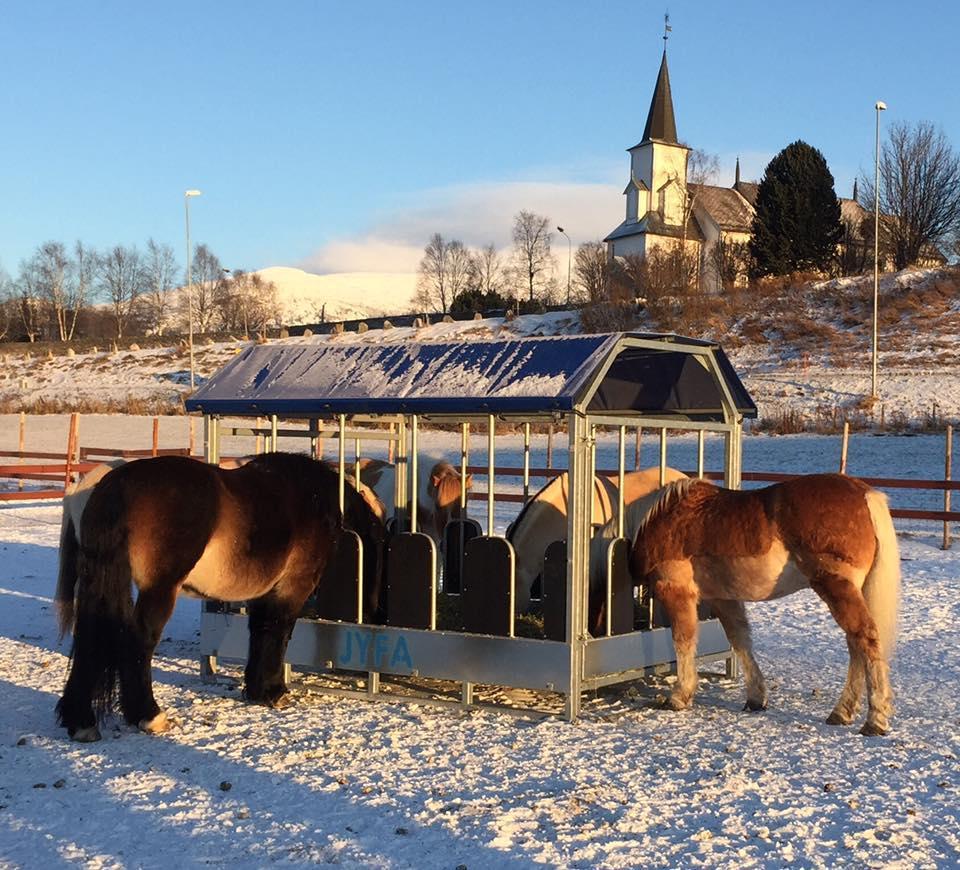 Forhekk. Hest. Foto