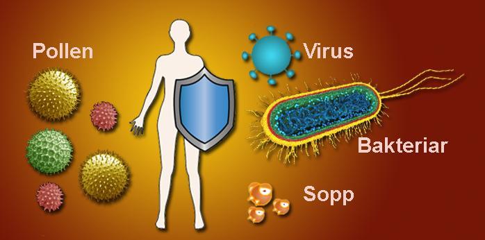En person med skjold innimellom bakterier, virus, sopp og pollen.