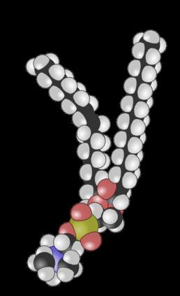Detaljert illustrasjon av oppbygging av cellemembran. Illustrasjon
