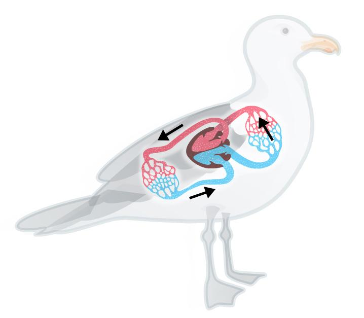Tegning av fugl med lukket kretsløp.