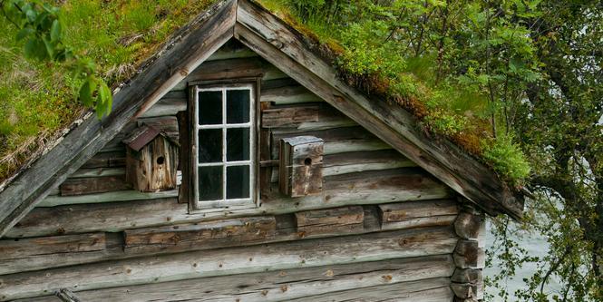 Gammelt hus med gress på taket. Overvokst torvtak. Foto.