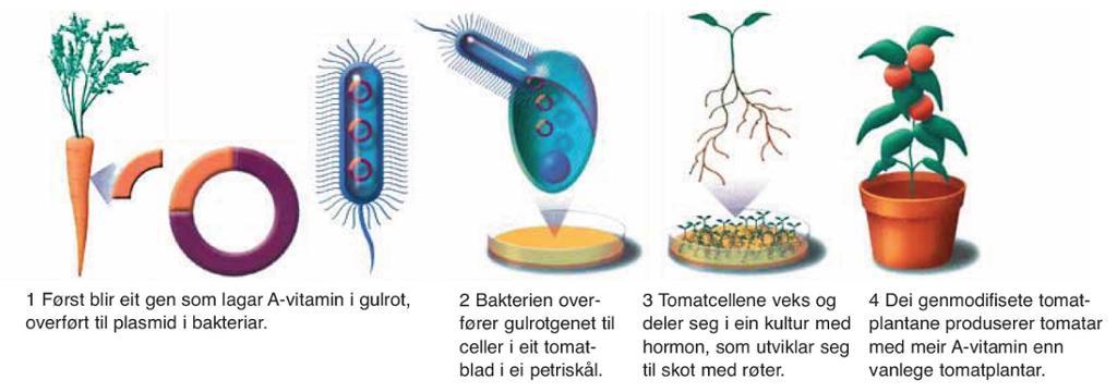 Overføring av gener mellom arter. Illustrasjon.