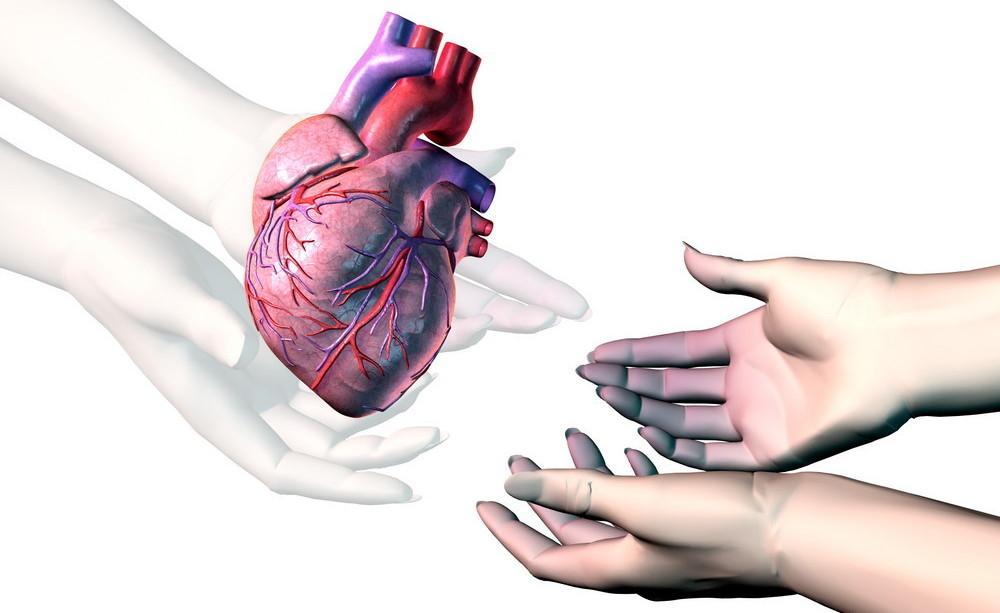 Gjennomsiktige hender gir et frisk hjerte til to hender som er blåaktige. Illustrasjon.