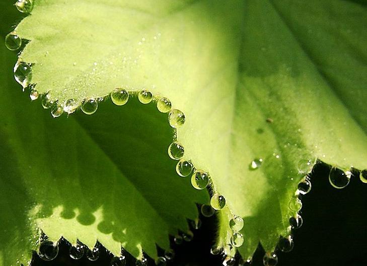 Vanndråper som henger på bladkanten