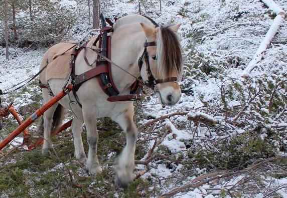 Hest. Bogtresele. Foto
