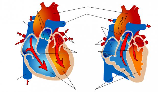 Fysisk trening ved hjerte- og karsykdommer