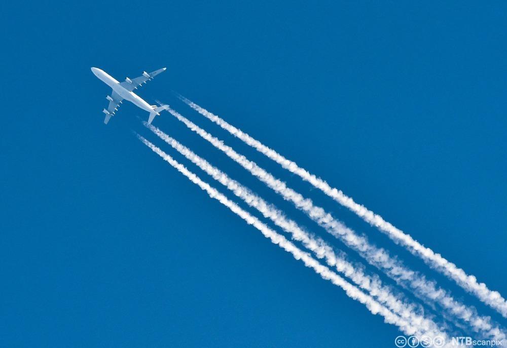 Fly mot blå himmel. Foto.