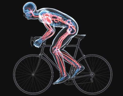 Illustrasjon av sirkulasjonssystemet hos en sykelist