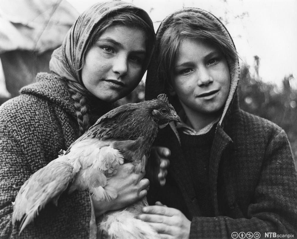 To søsken fra en romanifamilie i Surrey i England i 1964. Gutt og jente. En av dem holder en høne i hendene. Foto.