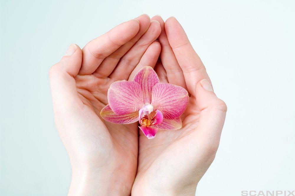 To hender holder en blomst. Foto.