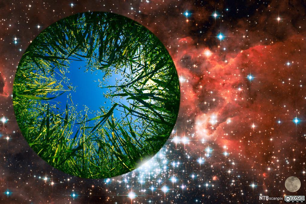 Vår grønne klode som svever i verdensrommet. Illustrasjon.