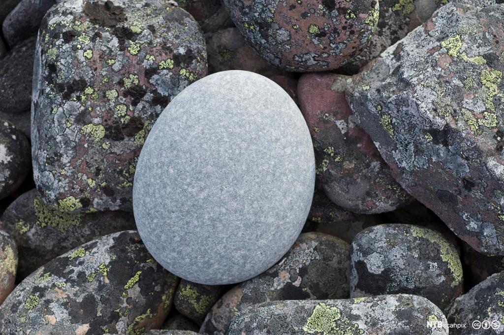 Lysegrå, polert og avrunda stein som ligger på kantete steiner med lav. Finnmark. Foto.