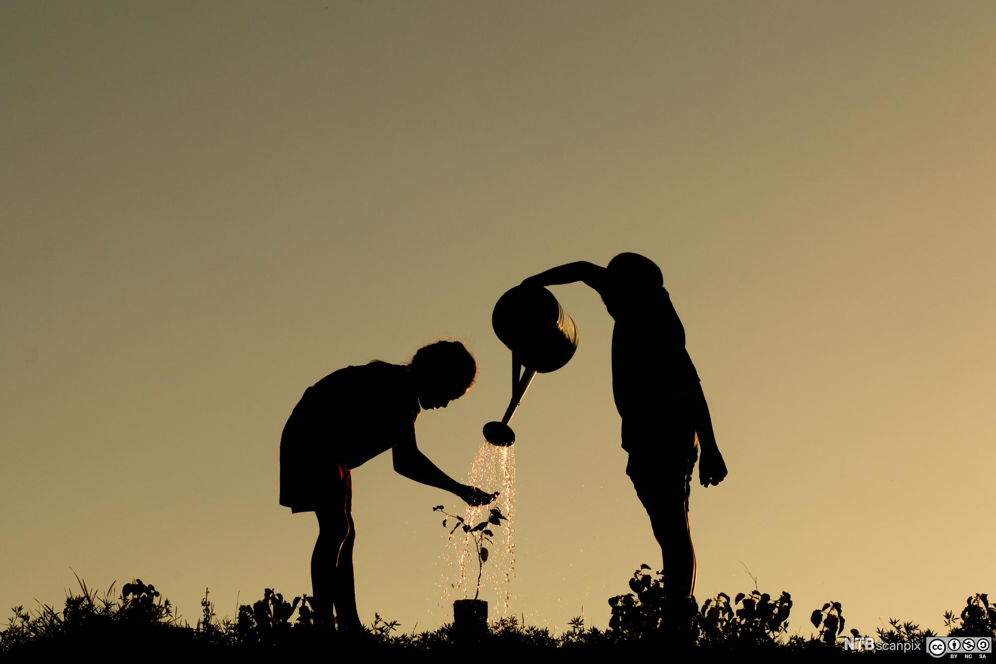 Silhuetter av to barn som vanner en plante med en vannkanne. Foto.
