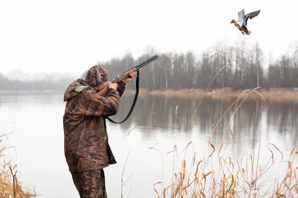 Jeger som skyter en and. Foto.